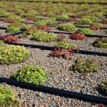 GREEN ROOFING FOR COMMERCIAL BUILDINGS