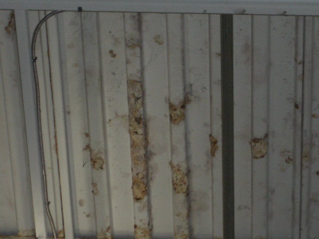 Indoor Mold Cleveland Ohio Commercial Roofing Contractor