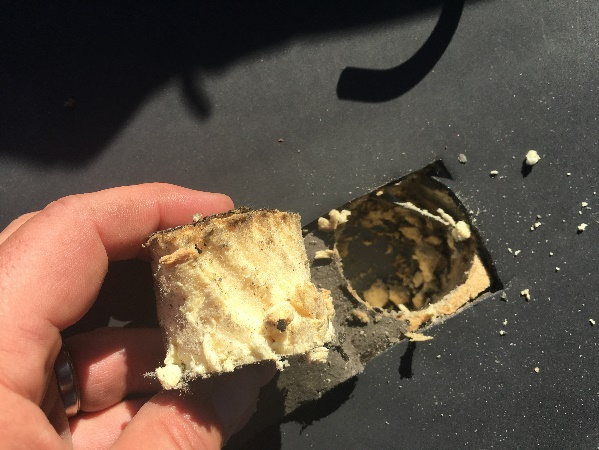 Core sample taken out of a Single-Ply membrane roof